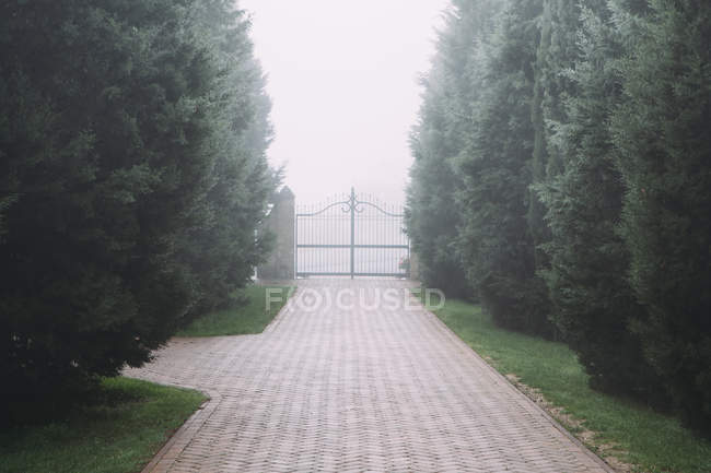 Driveway, gate and avenue — Stock Photo