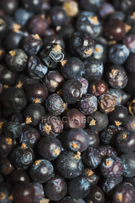 Juniper berries used to flavour beer. — Stock Photo