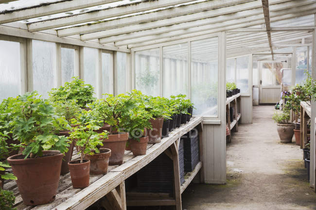 Interior view of the greenhouse — Stock Photo