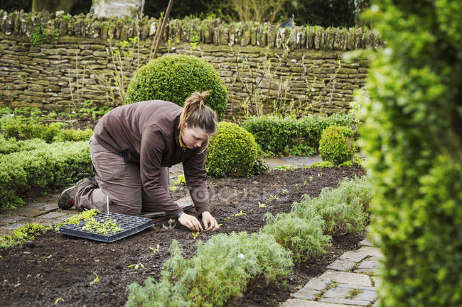 Woman planting seedlings — Stock Photo