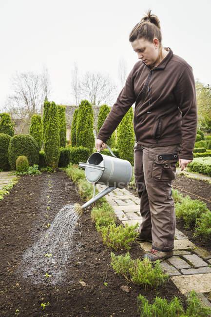 Donna che innaffia piantato piantine — Foto stock