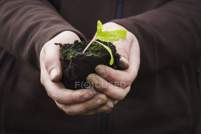 Human hands holding a seedling — Stock Photo