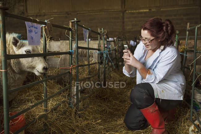 Mulher em pé um estábulo ao lado de uma caneta de ovelhas — Fotografia de Stock