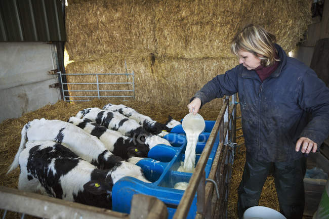 Verser le lait dans une mangeoire de femme — Photo de stock