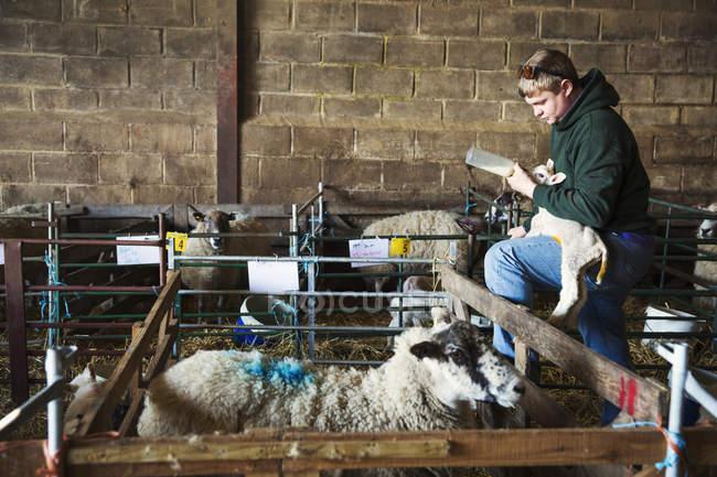 Homem de pé ao lado da caneta de ovelhas — Fotografia de Stock