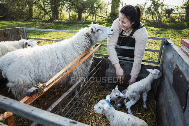 Woman standing with two ewes — Stock Photo