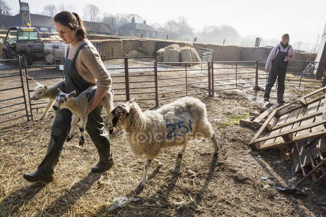 Duas mulheres em uma caneta de ovelhas — Fotografia de Stock