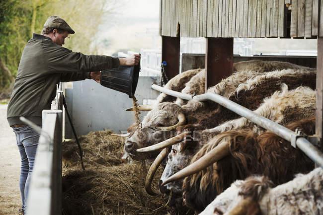 Agricultor esvaziamento alimentar — Fotografia de Stock