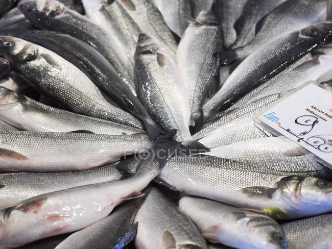 Fresh fish and price label. — Stock Photo