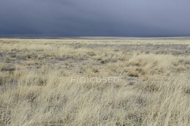 Sky and desert grasslands — Stock Photo