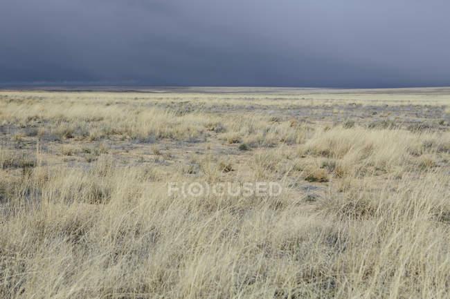 Pastagens do céu e o deserto — Fotografia de Stock