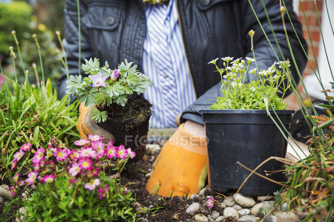 Person planting flower — Stock Photo