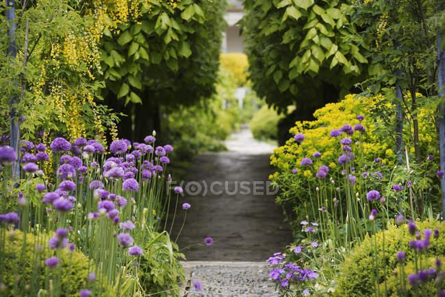 Weg im Garten anzeigen — Stockfoto