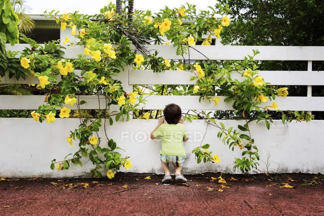 Kleiner Junge Blick Durch Gartenzaun Im Freien Mannchen Stock