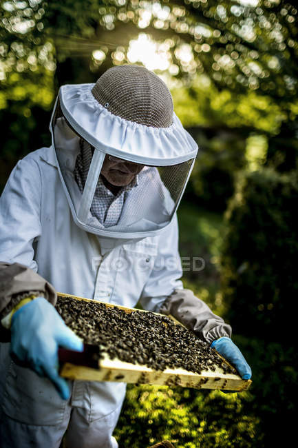 Beekeeper during work — Stock Photo
