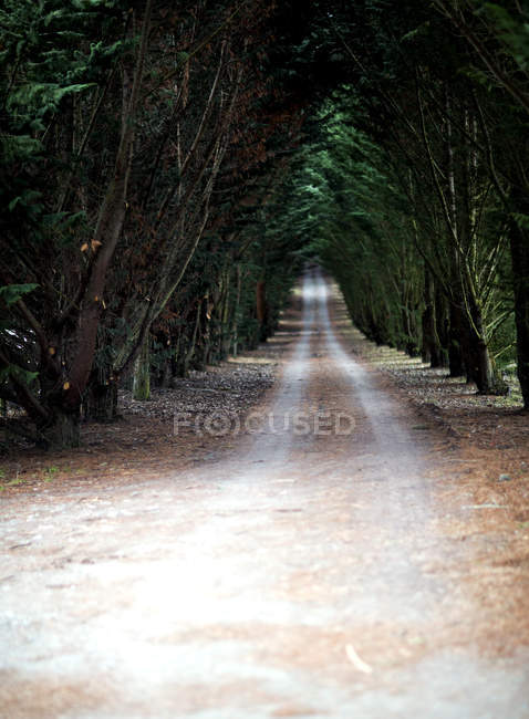 Trees lined country road. — Stock Photo