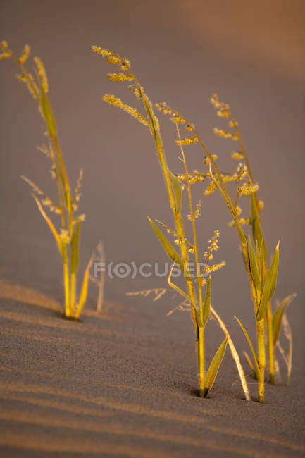 View of green plants in desert — Stock Photo