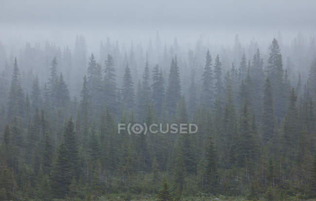 Trees in blizzard in forest — Stock Photo