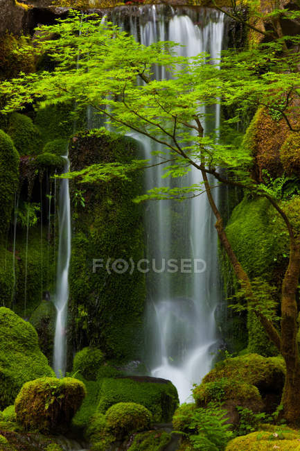 Waterfall in green forest — Stock Photo