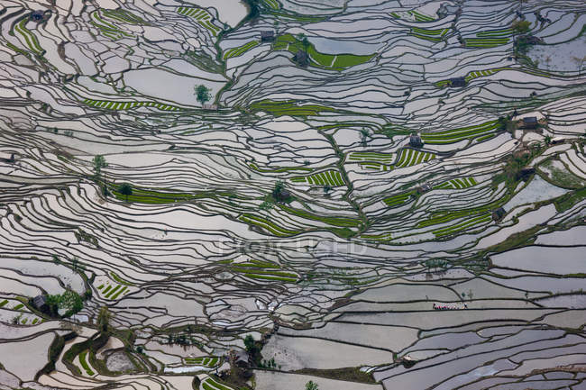 Terraced rice fields — Stock Photo