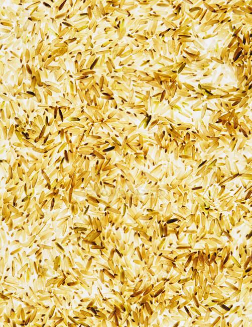 Шаблон коричневый рис — стоковое фото