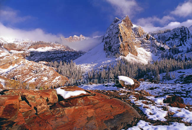Pine forests and mountains covered in snow — Stock Photo