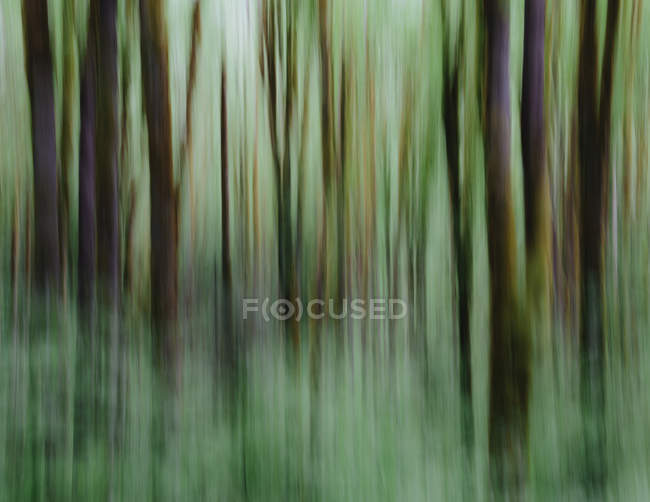 Blurred motion of forest — Stock Photo
