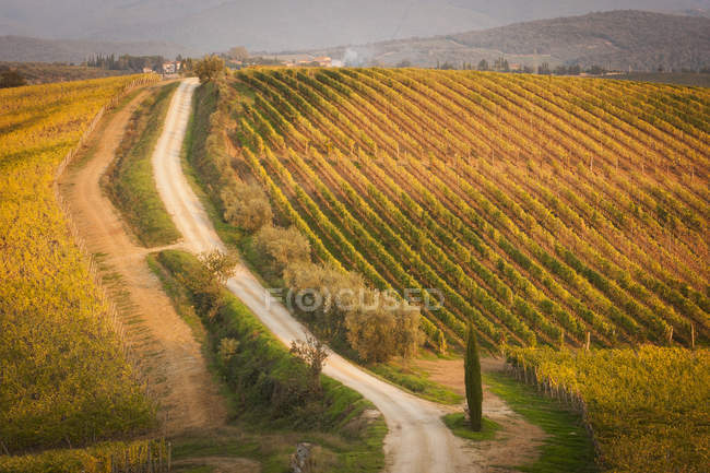 Road through a vineyard — Stock Photo