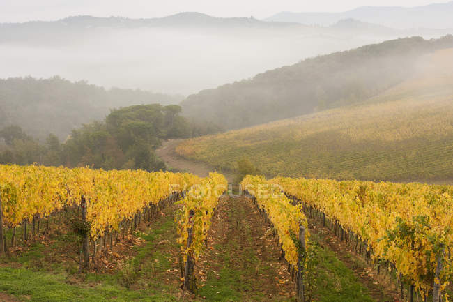 Vineyard in autumn with foggy mountains — Stock Photo