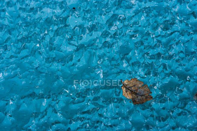 Лист на замороженных ледяной синий поверхности, макро — стоковое фото