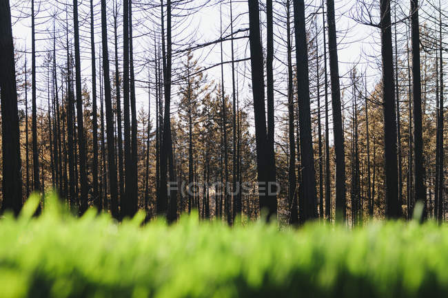 Lush grass and recovering forest after fire damage in Wenatchee national forest in Washington. — Stock Photo