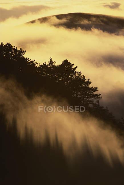 Прибережні секвої в туманний краєвид лісових sequoia Big Sur, Каліфорнія — стокове фото