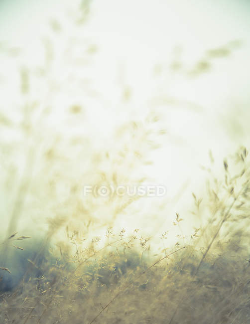 Close-up of grass in meadow, full frame. — Stock Photo