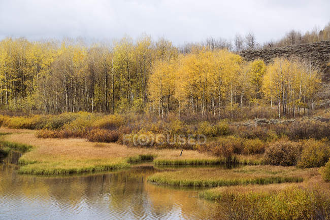 Trees in autumnal foliage on bank of country river. — Stock Photo