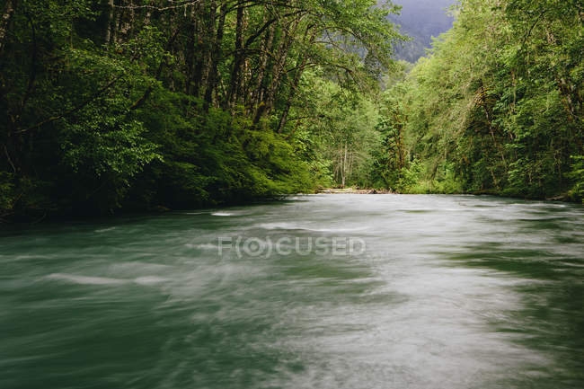 Dosewallips River and green temperate rainforest of Olympic National Park — Stock Photo
