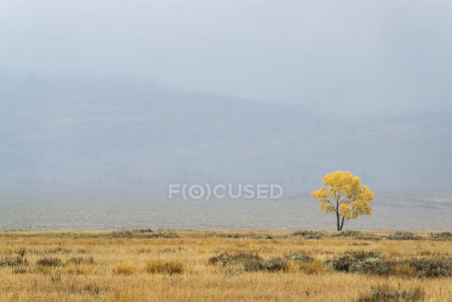 Single tree on horizon in autumnal landscape in Wyoming, USA. — Stock Photo