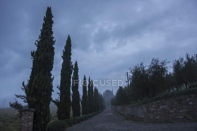Кипарисы на дороге с каменной стеной под облачным небом в Тоскане, Италия . — стоковое фото
