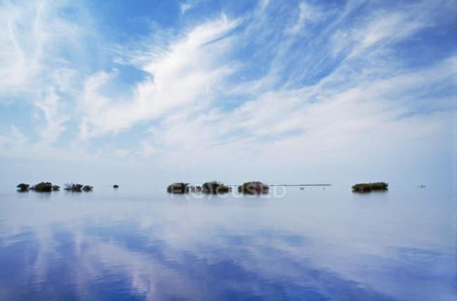 Mangrovie isolette sulla barriera corallina in acqua di mare a Dangriga, Belize . — Foto stock