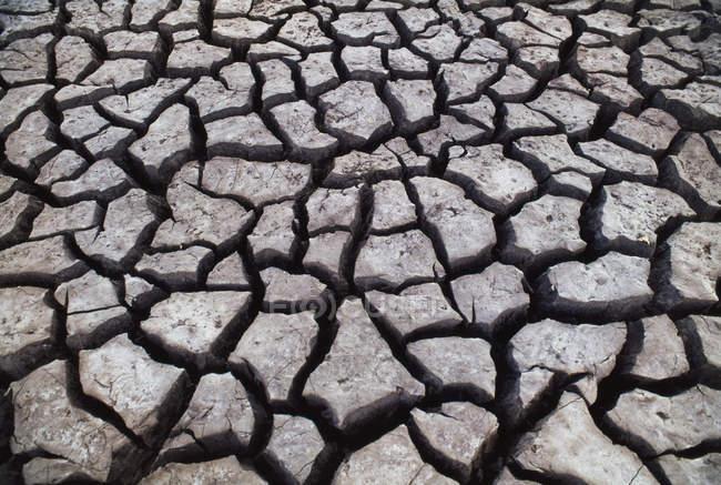 Тріщини бруд на поверхні землі у Чобе Національний парк, Ботсвани — стокове фото