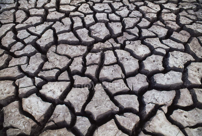 Cracked mud on surface of ground in Chobe National Park, Botswana — Stock Photo