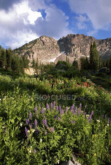 Landschaft von Little Cottonwood Canyon mit dem Teufel Schloss Berggipfel in den Wasatch-Gebirge. Wildblumen in hohe Gräser. — Stockfoto