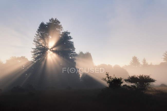 Le soleil brille à travers le feuillage de séquoias à Monterey Bay, Californie — Photo de stock