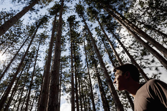 Low angle view of young man looking up into pine forest tree tops. — Stock Photo