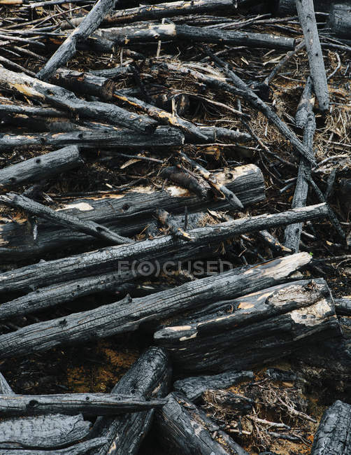 Burned logs and debris from clear cut forest — Stock Photo