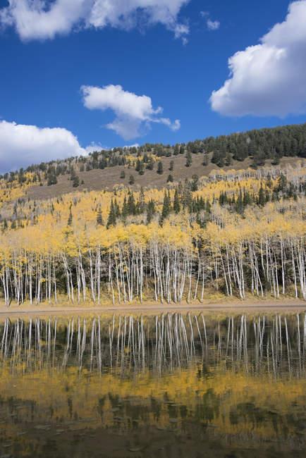 Vallée de trembles et colline boisée à Silver Lake. — Photo de stock