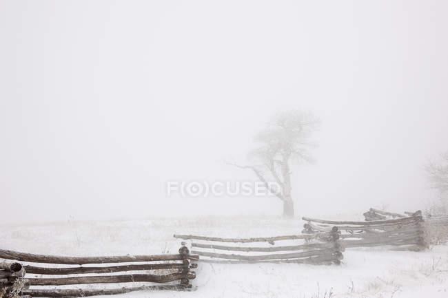 Nieve en el suelo por campo cerca de madera en el paisaje rural de invierno . - foto de stock