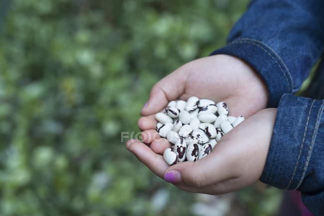 Kind hält getrocknete Bohnen in geschälten Händen, Nahaufnahme. — Stockfoto