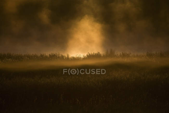 Fog and rising sun in sky at dawn over rural landscape — Stock Photo