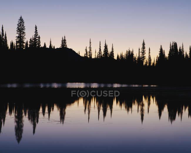Silhouette of pine trees on edge of Reflection Lakes in Mount Rainier national park, Washington — Stock Photo