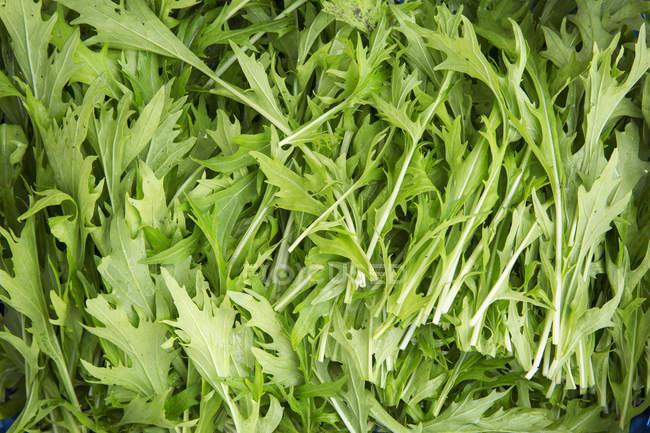 Hojas ramitas verdes frescas de rúcula, marco completo - foto de stock